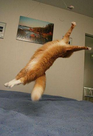 Back_Flip_Cat