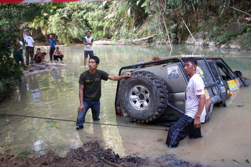 image from www.junglegeckos.com